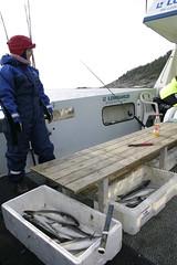 Fishing (Johannes2) Tags: fish pollock sei jannicke