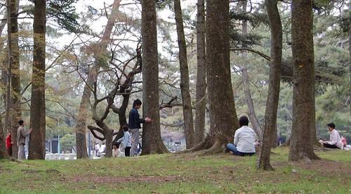 La secte des arbres