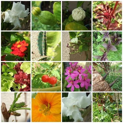 gardenmosiac