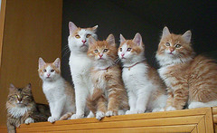 big family (veraecho) Tags: cute cat kitten sweet gattini bestofcats anawesomeshot lifebeautiful kodak6200