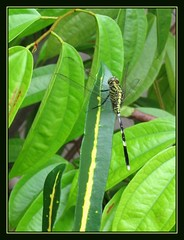 Camouflaging dragonfly!