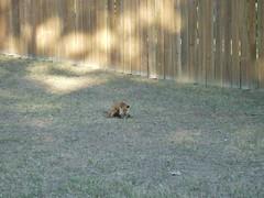P4160179 (tbertor1) Tags: crossing tulio flox bertorini
