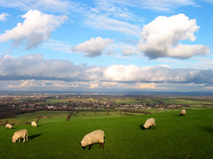 Sheep and the South Downs at Jack and Jill Windmills (david.nikonvscanon) Tags: world camera uk original windmill digital photoshop photography sussex photo search saturated nikon photographer sheep image postcard creative commons icon images photograph luck lucky pixel creativecommons saturation surprise dp digitalphoto find southdowns chromatic digitalimage theworld digitalphotograph jackandjill oneworld f301 aberation nikonvscanon viewtheworld davidnikonvscanon