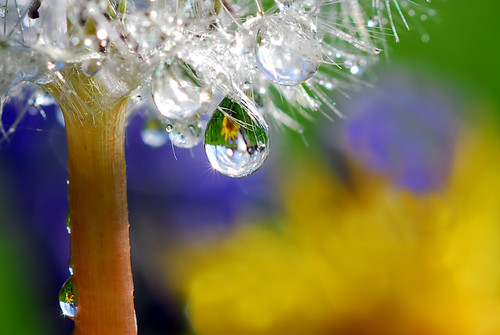 dandelion, drop, light
