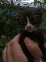 handheld (le bunny) Tags: kittens tiny meow felines gatitos needhomes