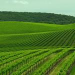 4200 + Views! Sonoma County Vineyard