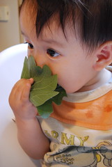 Zen is eating Kashiwa-mochi on Children's Day.