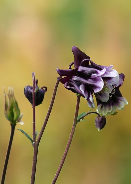 Purple Mysteries