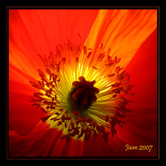 Sunburst (Etc.Ja.An) Tags: california light flower backlight center botanicalgarden palosverdes excellence supershot flowerotica outstandingshots top10interestingness flickrsmileys mywinners superaplus aplusphoto flickrhearts ithinkthisisart flickrdiamond superhearts heartawards shinningstar heartsawards