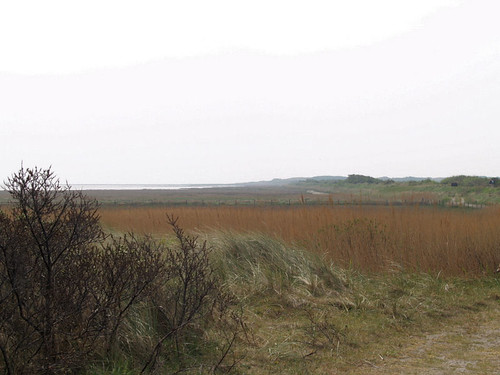 Vlieland: nature reserve: birds