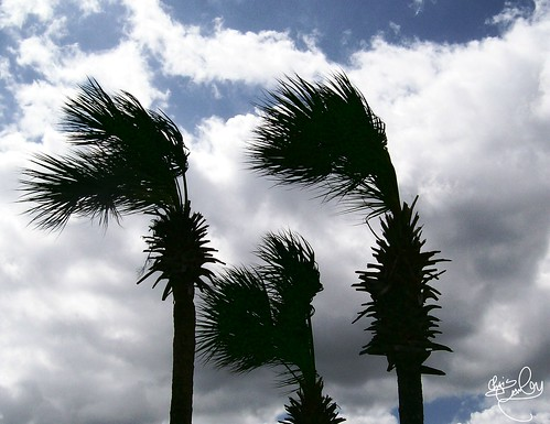 Palms Blowing in the Wind by celticsong22.