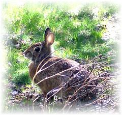 sweet bunny soft