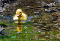 rubber ducky, you\'re the one.