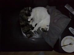 08052007037.jpg (judey) Tags: cat twinkle pixel