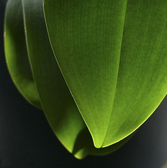 (anders mrtsell) Tags: flowers orchid flower green leaves square leaf diamondclassphotographer flickrdiamond top30green