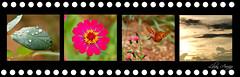 Presente de Dia das Mes* (Lilian Arajo) Tags: day banner dia mothers gift das presente lilian montagem arajo mes impresso