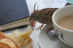 Croissant thief