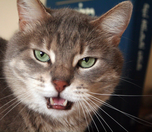 Cat With Mouth Open 67