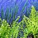 Fresh Ferns of May