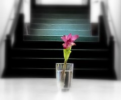 Aj Aalo Andharey - Today in Light & Dark (Monsoon Lover) Tags: life flower nature flickr steps lightdark forestflower seenunseen sudipmonsoonlover