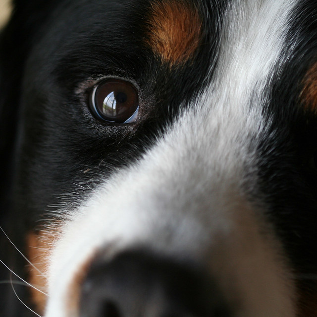 Berner Close Up