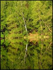 Green green green... (Bison86) Tags: travel lake tree green poland polska bison mru wyprawy