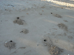 Sand crab holes (Jeff the Trojan) Tags: hawaii sand crab