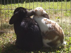 Bunny & Mochi sitting in the garden (Romy87) Tags: pet cute bunny animal tiere mochi rabbits kaninchen hasen