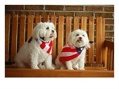Dogs Wearing American Flags