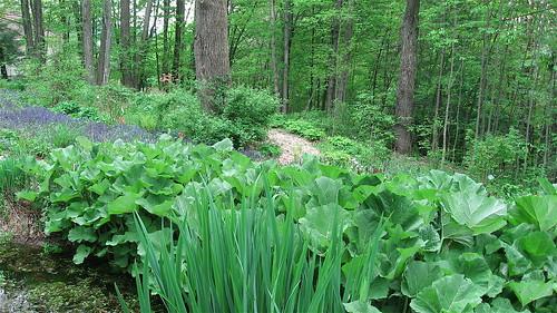 Lower garden edge of pond