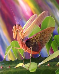 Spanish Dancer (Rascaille Rabbit) Tags: mantis insect bravo insects magical coolest soe prayingmantis mantid prayingmantid abigfave superaplus aplusphoto 200750plusfaves goldenphotographer diamondclassphotographer flickrdiamond superhearts macrophotosnolimits macrofoted colourartaward