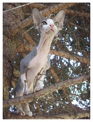 Tina up a tree_ Pet Sitters Wimberley Texas