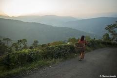 Tea plantation worker walking home near Darjeeling, West Bengal, India (Christian Loader) Tags: christianloader india tea plantation worker woman local walking hills mountains sunset darjeeling westbengal landscape view scenic teaplantation