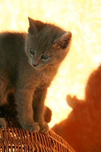 Kittens of Pegusha - Page 2 3263434225_1dd1b4f54b