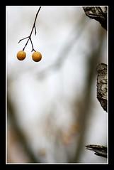 Yo las tengo redonditas (eva cuca) Tags: tree arbol eva dof yo calafell pelotas minimalismo arbre digo pelotitas bolitas instantfave mywinners abigfave tepasaste ltytrx5 anawesomeshot ltytr2 ltytr1 evacuca wowiekazowie