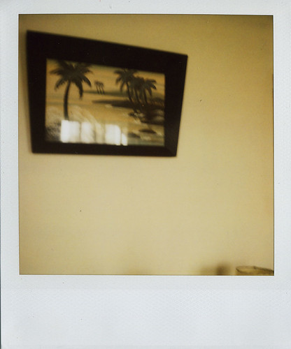 jason's :: palm trees