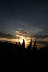 Astro maGuey (·júbilo·haku·) Tags: sunset cactus sun sol méxico clouds mexico atardecer nubes maguey realdecatorce slp realde14 suno nuboj sanluispotosí meksiko noktiĝo dflickr grangrupo granfoto dflickr180307