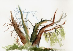 Mystic Tree (Amudha Irudayam) Tags: watercolor painting northwest amudha