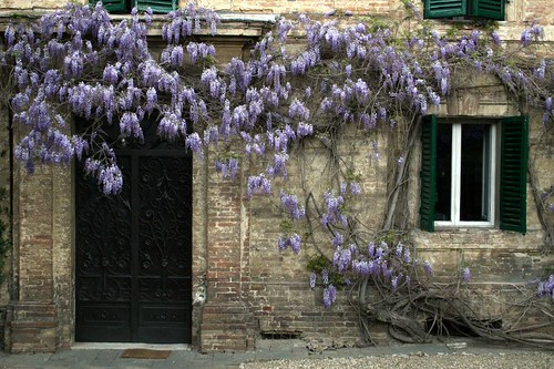 Wisteria waving goodbye