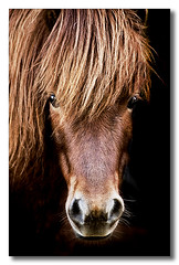 Portrait Of A Horse (nailbender) Tags: portrait horse animal bravo mare farm quality soe equine onblack nailbender flickrsbest abigfave anawesomeshot jdmckinnon