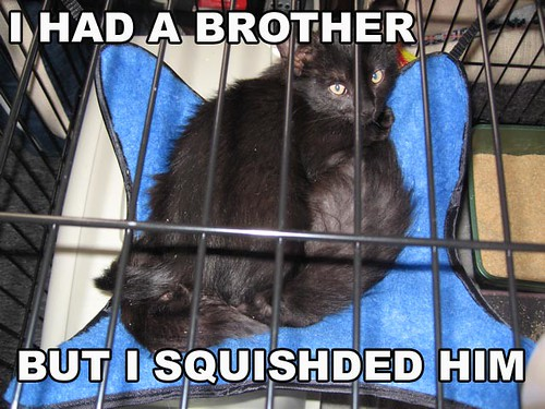 i had a brother,but I squishded him