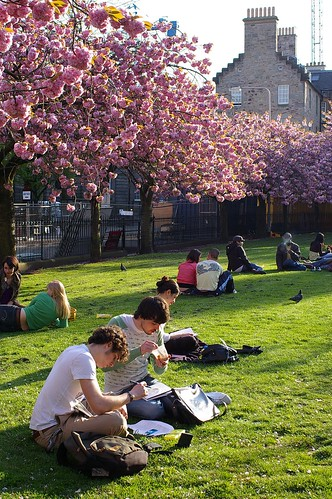 nicolson square 櫻花樹