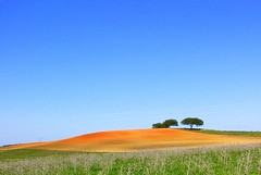 Thanks god it's Friday (luisa_m_c_m_cruz) Tags: trees red sky brown green portugal nature colors rural bravo hill scenary land alentejo flickrsbest