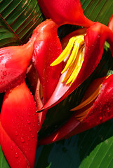 Red Drama (uteart) Tags: plant colorful explore excellence colorphotoaward superbmasterpiece 1on1colorfulphotooftheday utehagen uteart 1on1colorfulphotoofthedaymay2007 explore050407472