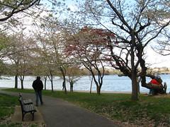 IMG_2339 (trisho.) Tags: flowers blue vacation water washingtondc dc bloom april cherryblossoms april2007