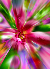 Flower Power (di_ablow) Tags: pink red orchid flower colors purple supershot ultimateshot 1on1colorfulphotooftheday 1on1colorfulphotoofthedaymay2007
