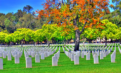 Los Angeles National Cemetery 3 (Pat's Travelogue) Tags: cemetery los angeles westwood blvd wilshire sepulveda