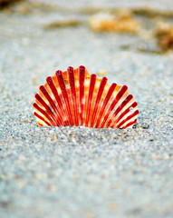 Playing with a sea shell (mysza831) Tags: ocean park beach nature newjersey sand shell