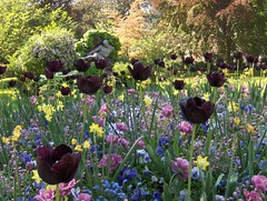 Jardin du Luxembourg (Joe Shlabotnik) Tags: flowers paris france tulips 2007 april2007