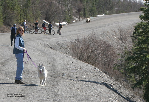 bikers and bear